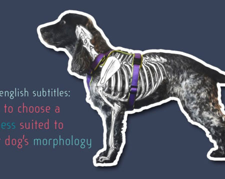 dog morphology