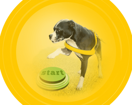 Dog Course Image