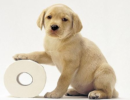 Dog with toilet paper