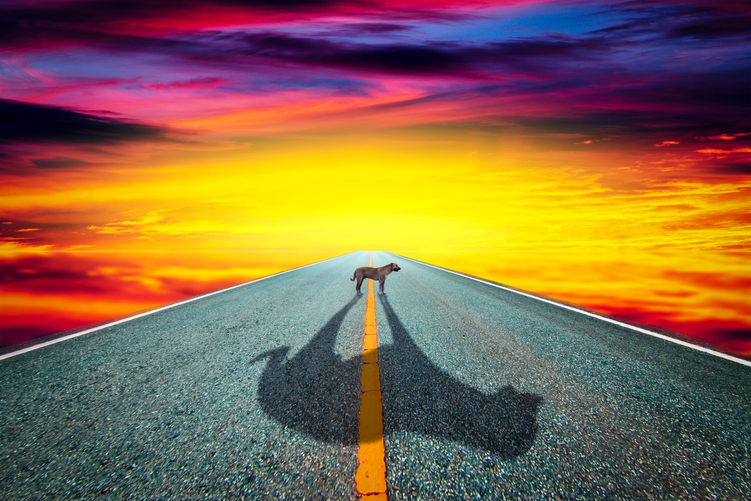 Dog and shadow on the road with dramatic sky background.Art tone