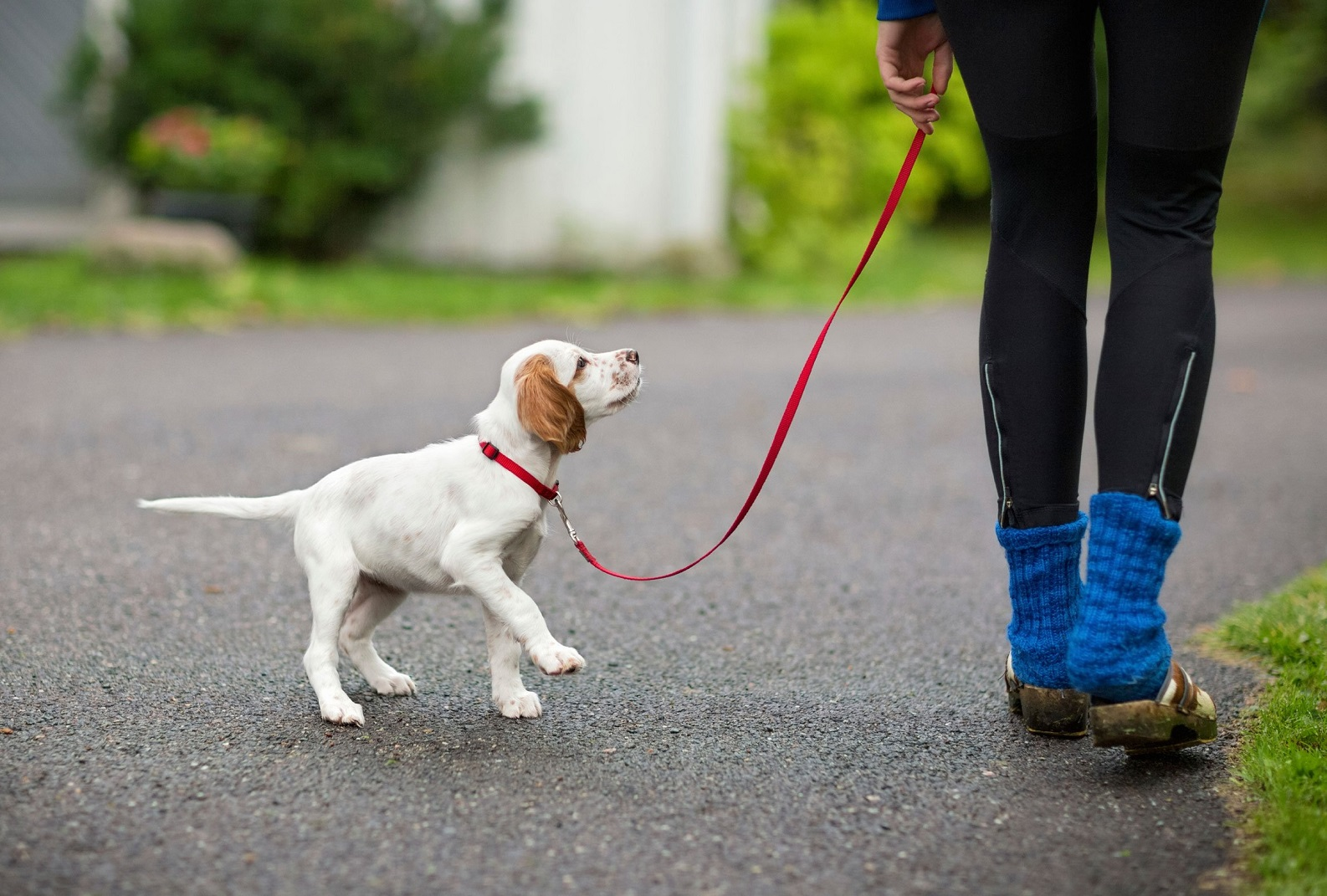 How To Train A Puppy To Walk On A Leash Without Pulling 1 Zdj.