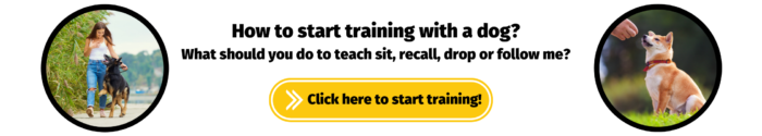 How to start training with a dog?