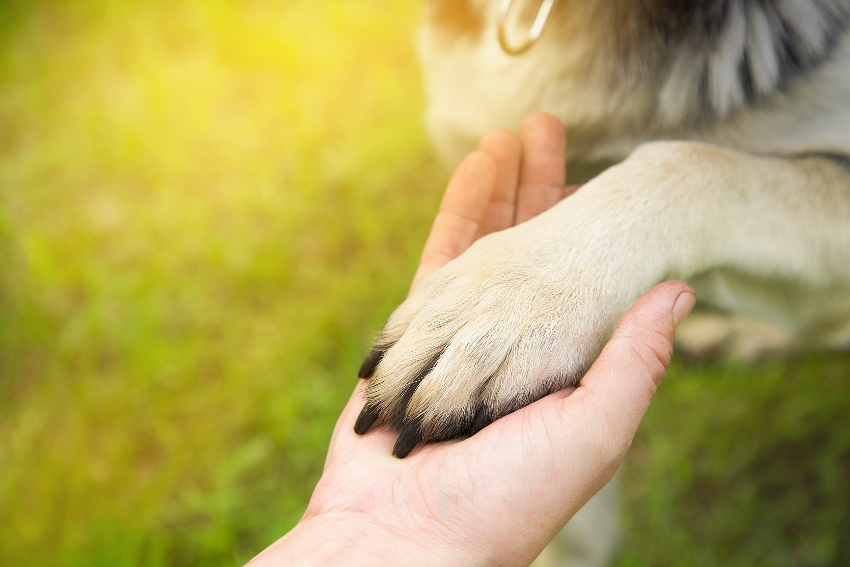 A Man Holds The Paw Of The Dog In The Park In The Summer At Suns