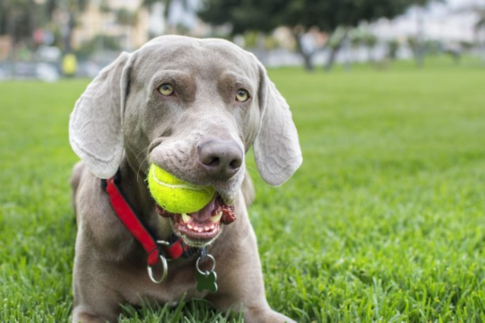 What Is The Best Age To Start Training A Dog 2 Zdj.