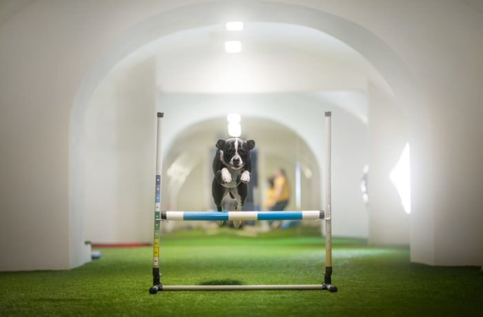 What Is The Best Age To Start Training A Dog 3 Zdj.