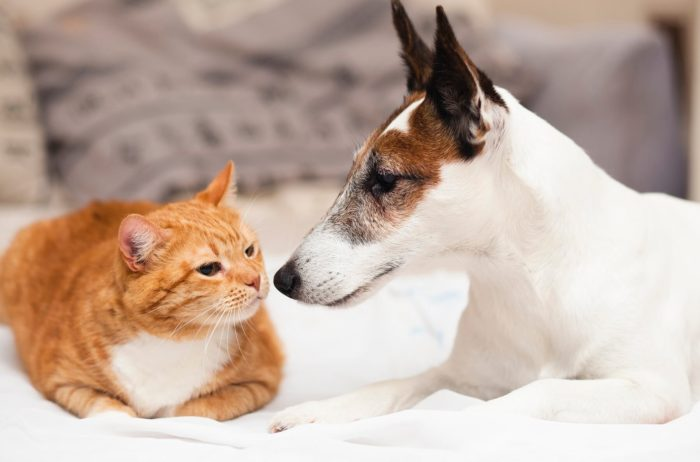 Tromplo 2 Zdj. Cat And Dog Introductions