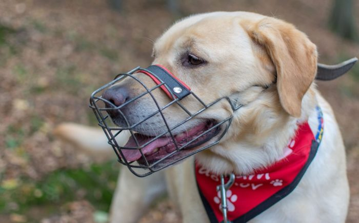 Tromplo 2 Zdj. How To Train Your Dog To Wear A Muzzle