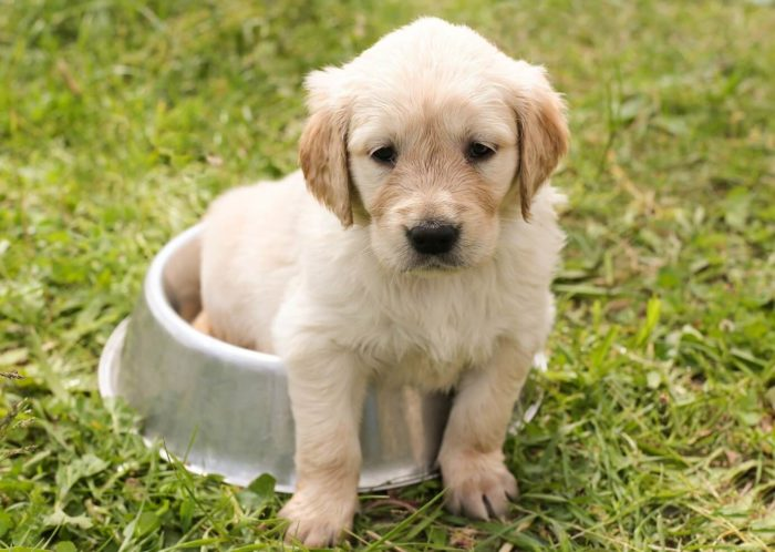 Tromplo 3 Zdj. How To Train Your Puppy