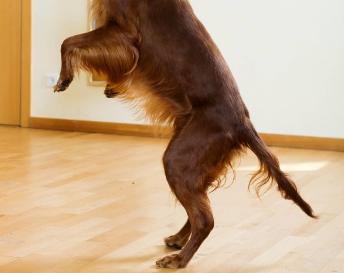 How to train a dog not to jump on you or others