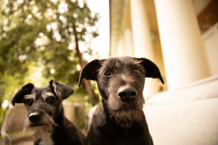 1. How To Choose A Good Dog Trainer