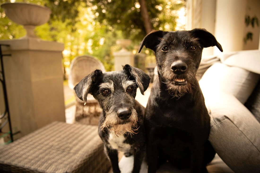 Modifications in dog training
