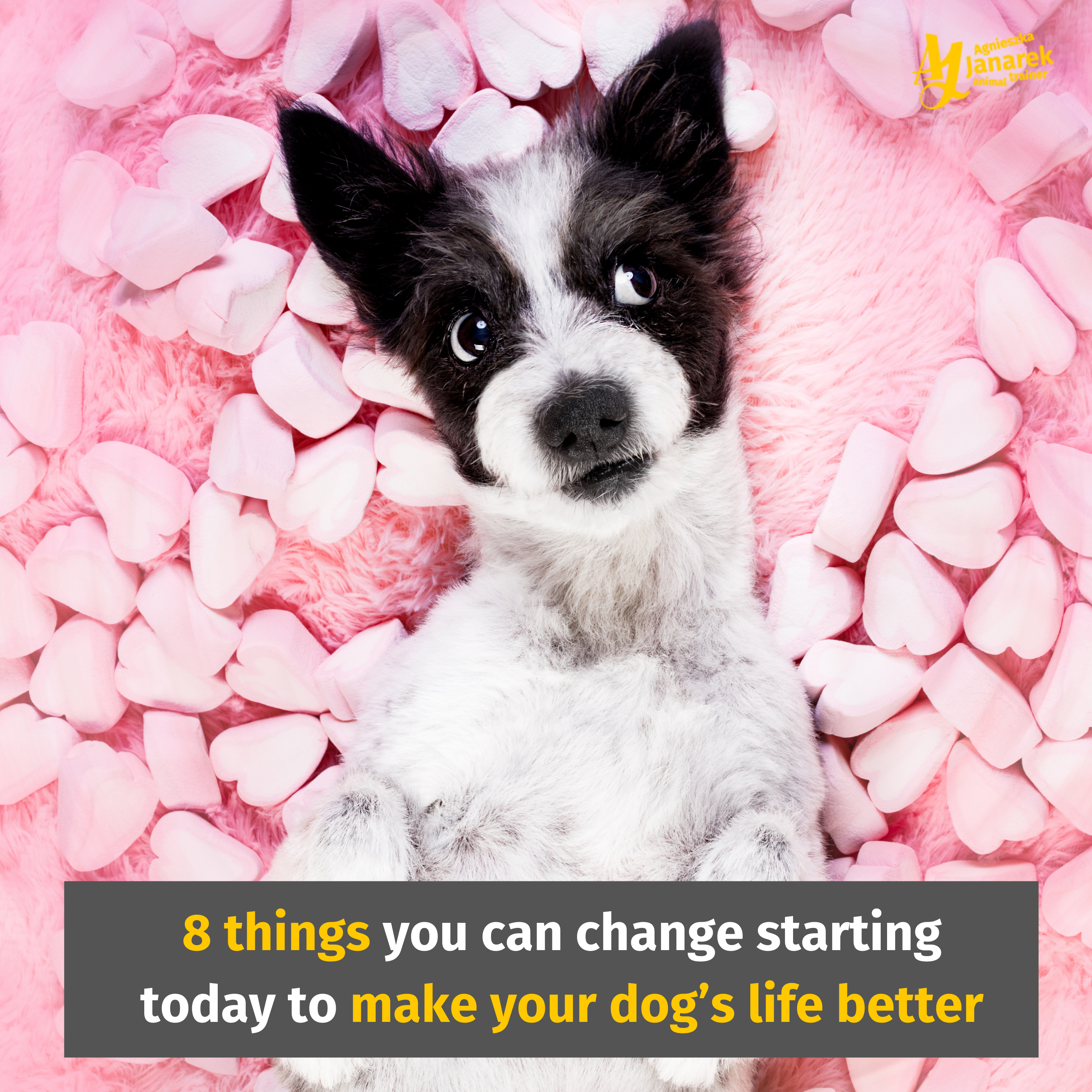 8 Things You Can Change Starting Today To Make Your Dog's Life Better