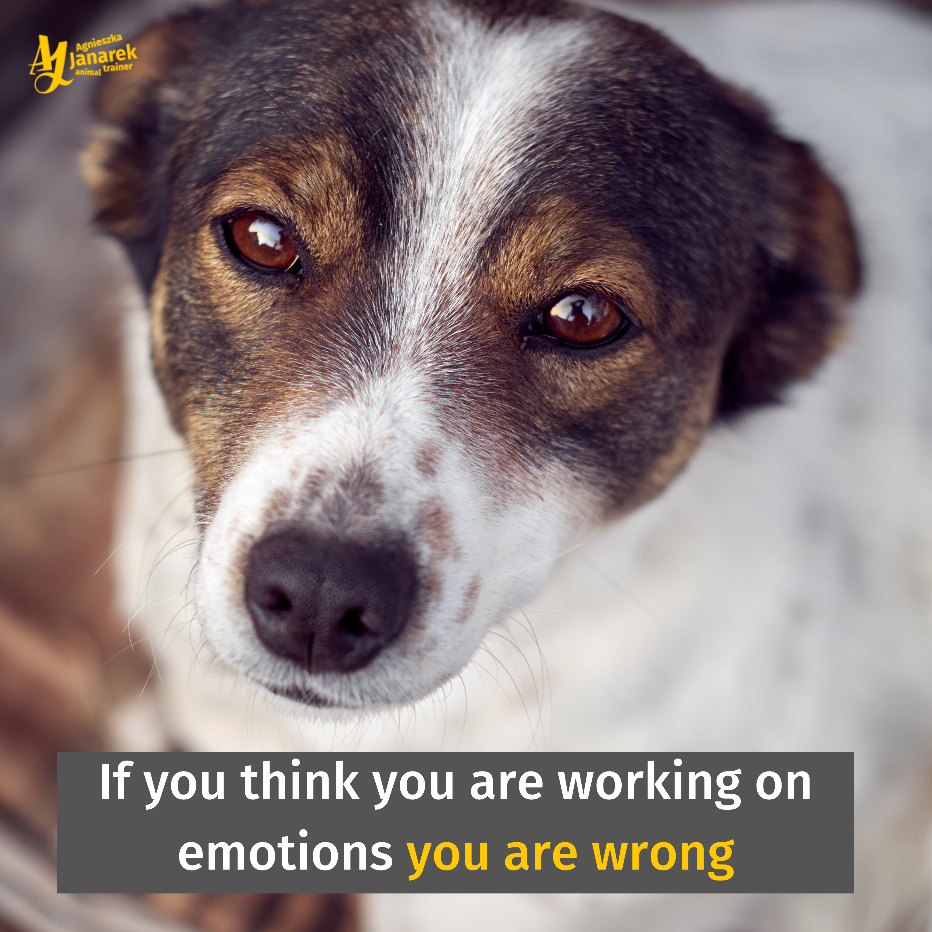 If You Think You Are Working On Emotions You Are Wrong