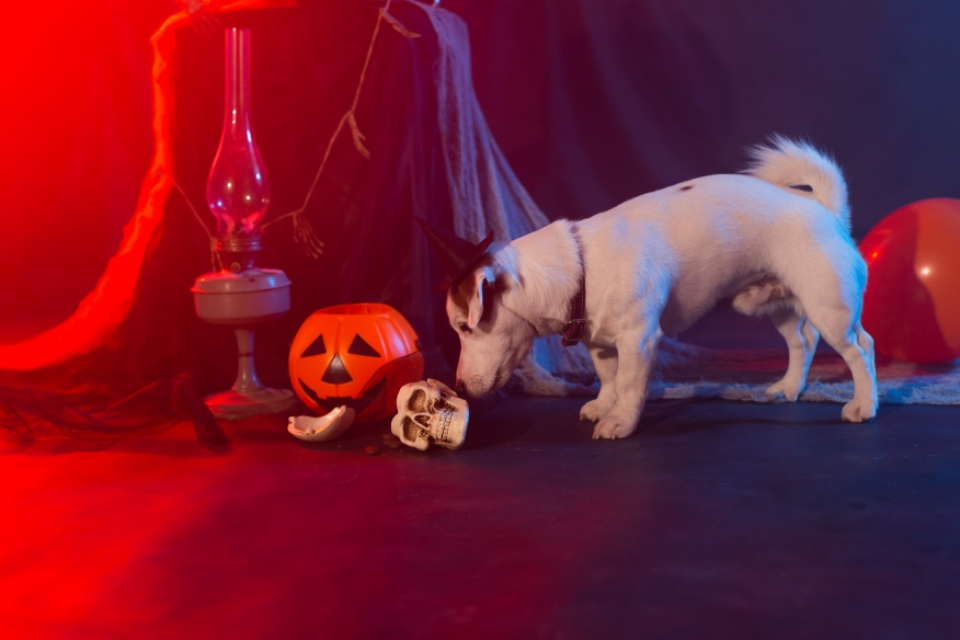 dog and cat safe on Halloween
