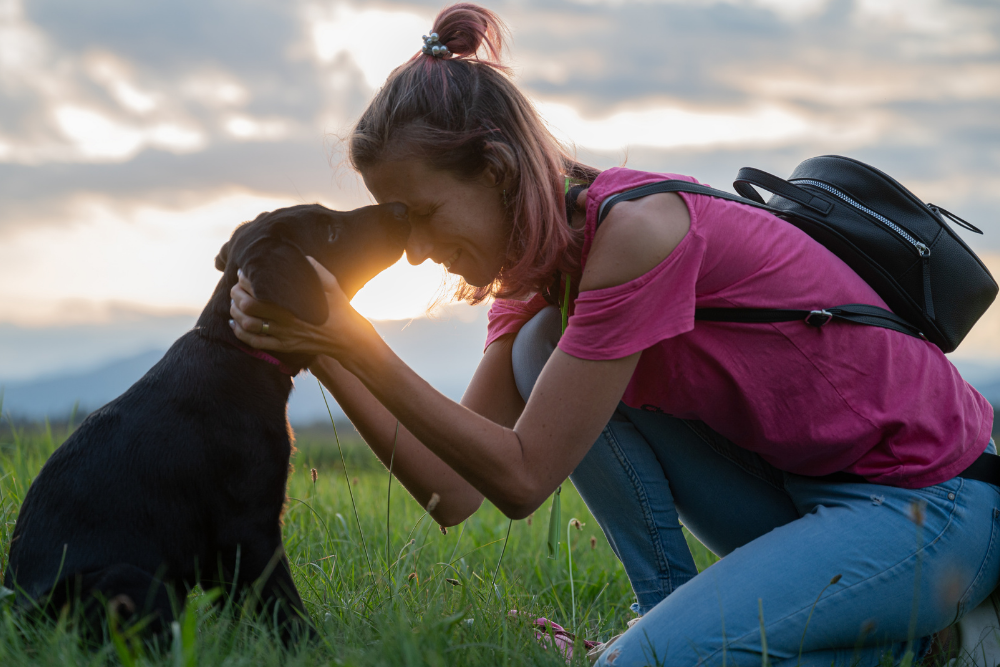 How to build dog's trust? The power of trust and relationship