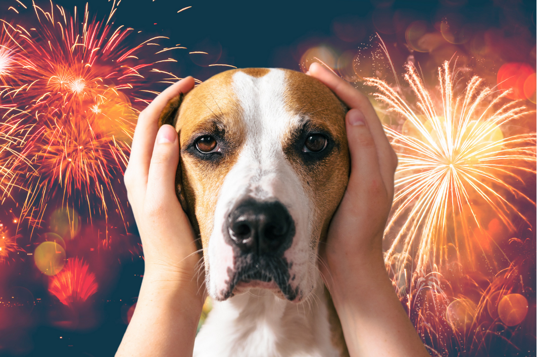 Unfortunately for many animals and their caregivers this is one of the worst days of the year. What can you do if your dog is scared of fireworks?